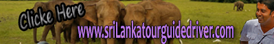 Sri lanka tour guide driver